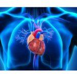 Specialitatea cardiologie