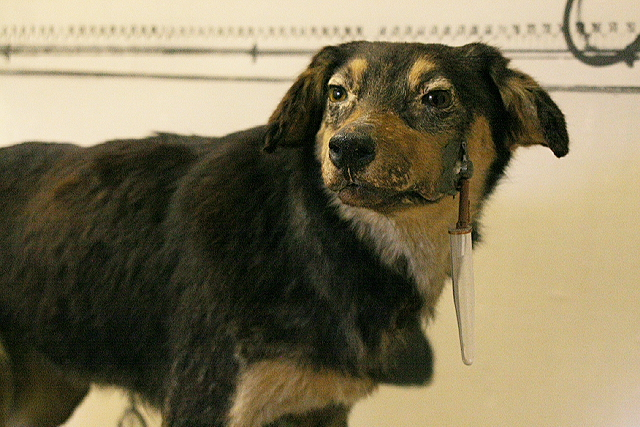 Câinele lui Pavlov, în Muzeul Pavlo