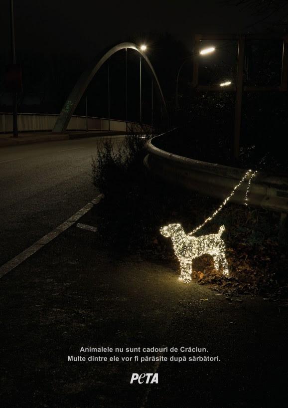 """""""Animalele nu sunt cadouri de Crăciun"""" (VIDEO)"""