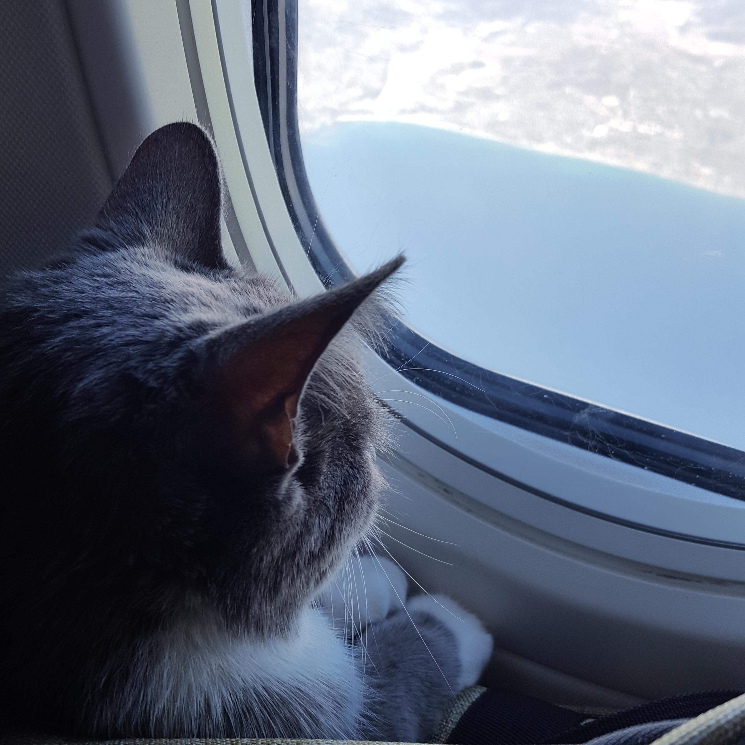 O companie aeriană a decis: doar câinii și pisicile pot fi transportate în avion ca sprijin emoțional