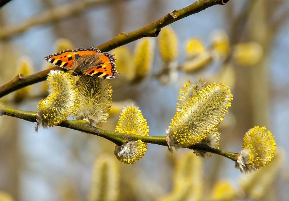 Duminica Floriilor și Săptămâna Patimilor!