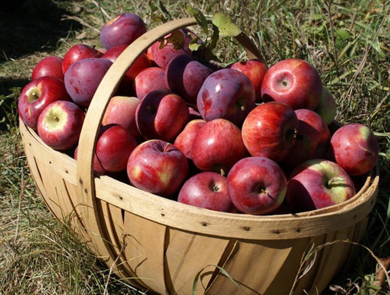 Lucruri neștiute despre mere. Cât de des este bine să le mănânci