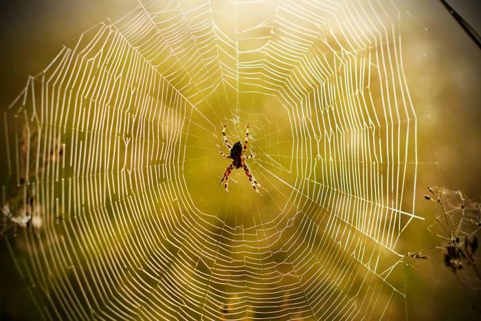"""Cum sună """"muzica"""" unei pânze de păianjen. VIDEO"""