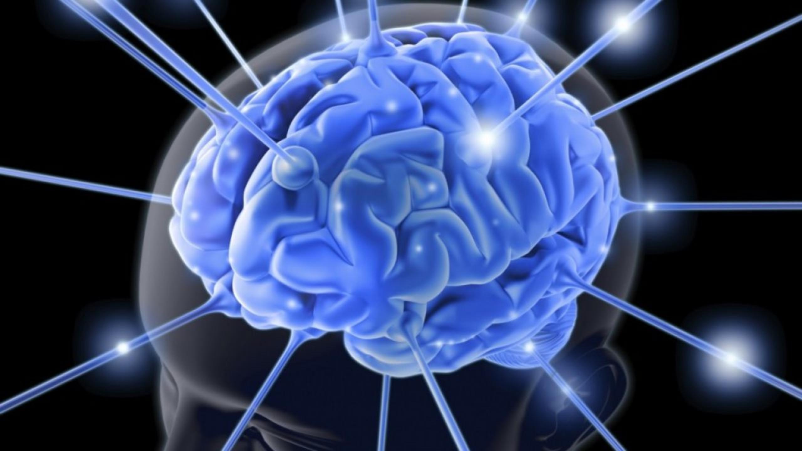 Legătura dintre semnalele de memorie din creier și metabolism. Explicațiile cercetătorilor